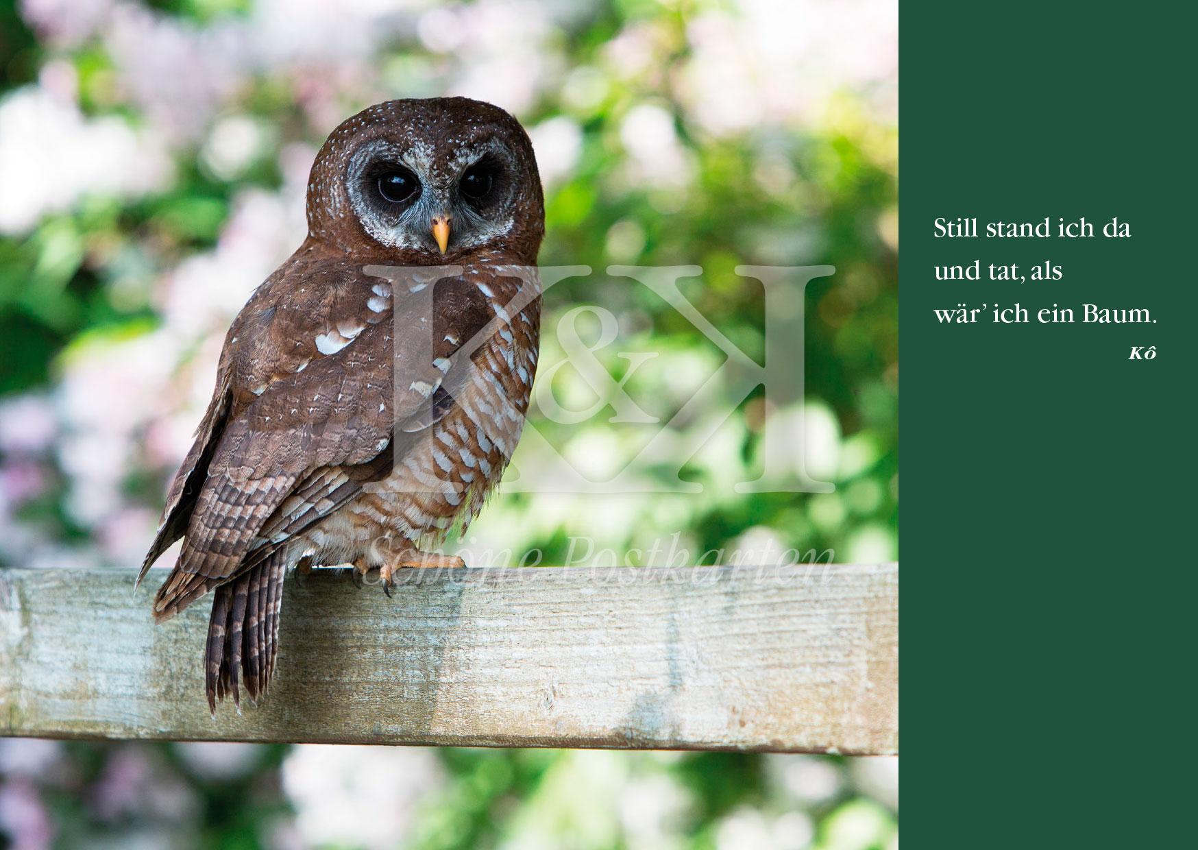 <strong>Schöne Postkarte Nr. 102</strong> · Kô: Haiku mit Kauz © 2018