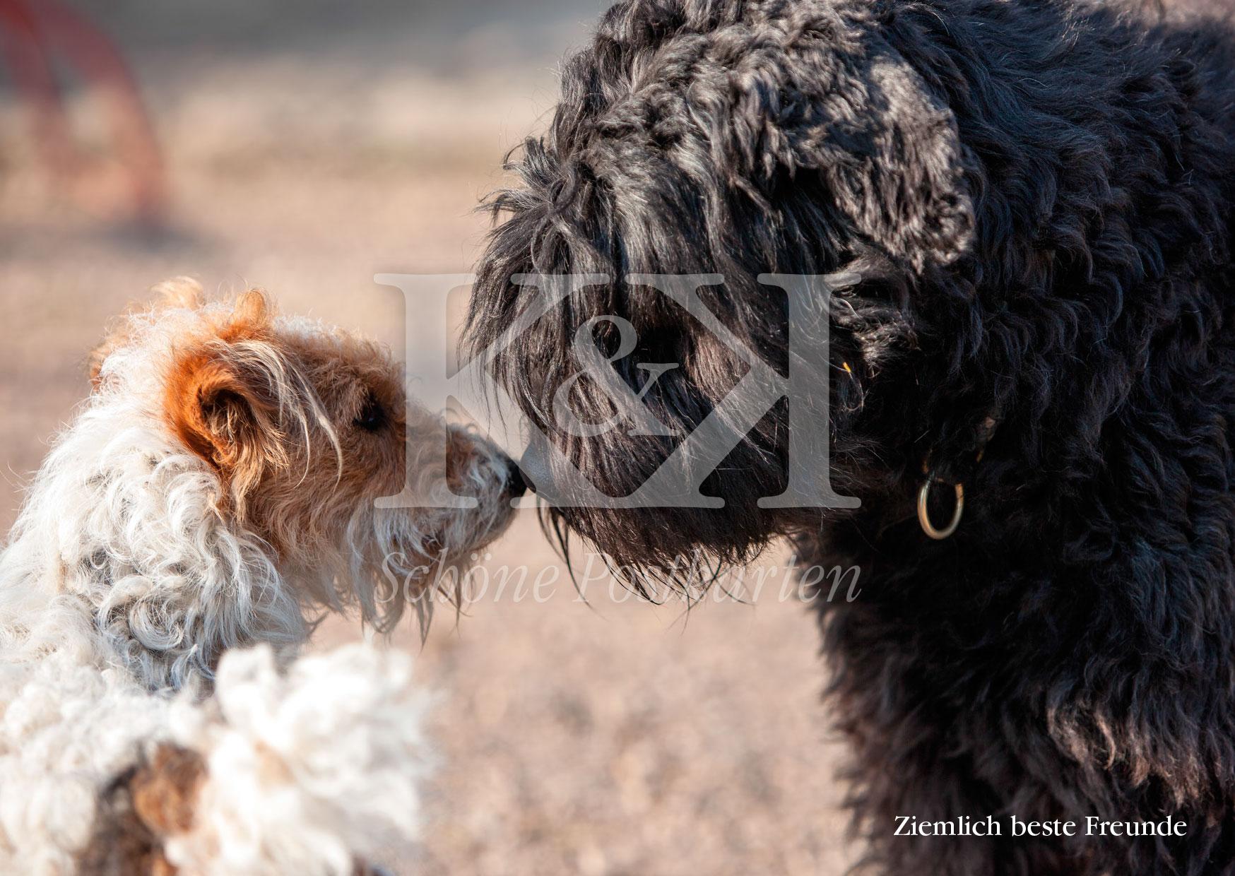 <strong>Schöne Postkarte Nr. 128</strong> · Fox und Bouvier: Ziemlich beste Freunde © 2018