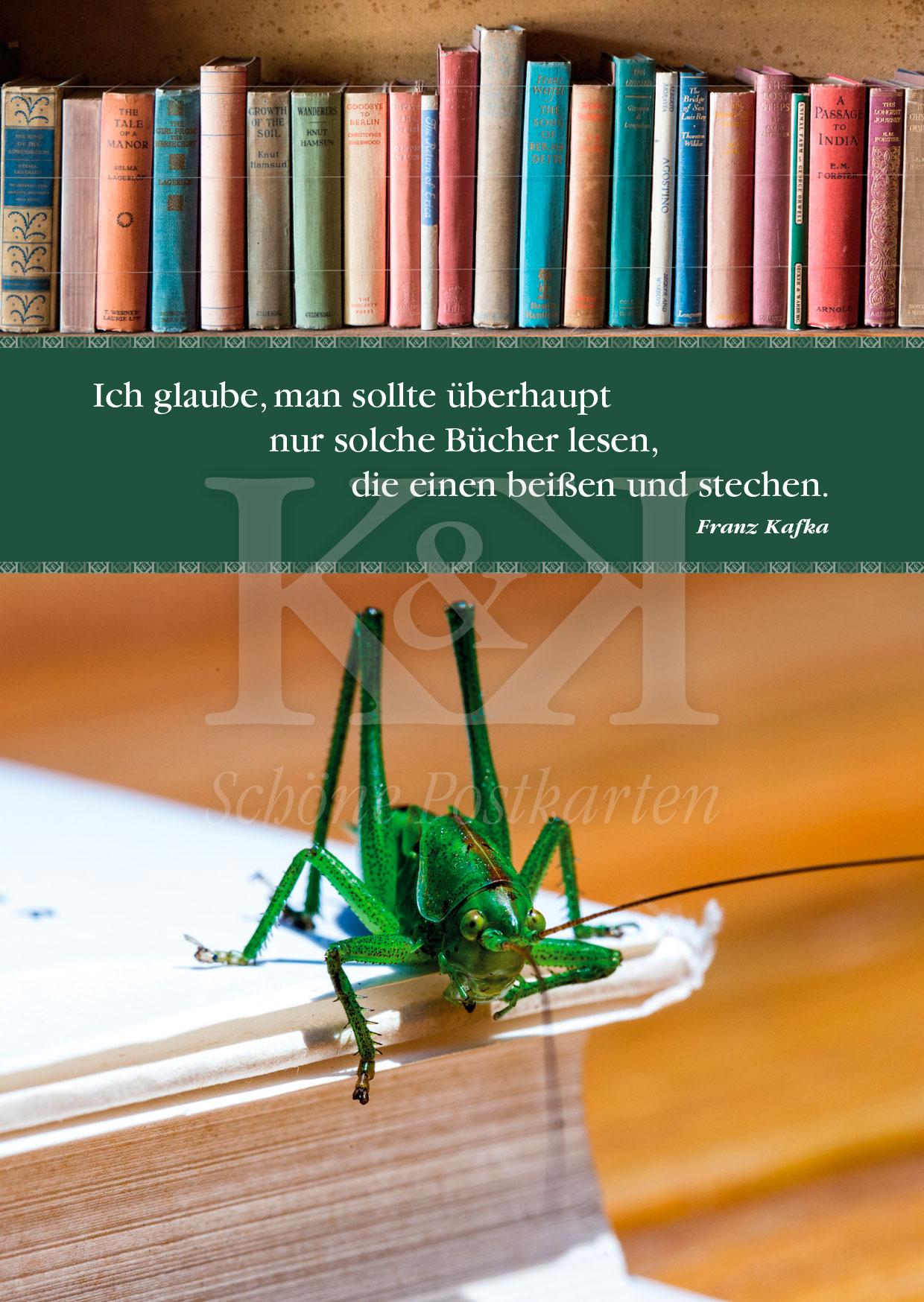 <strong>Schöne Postkarte Nr. 20</strong> · Kafka: Bücher, die beißen und stechen © 2018