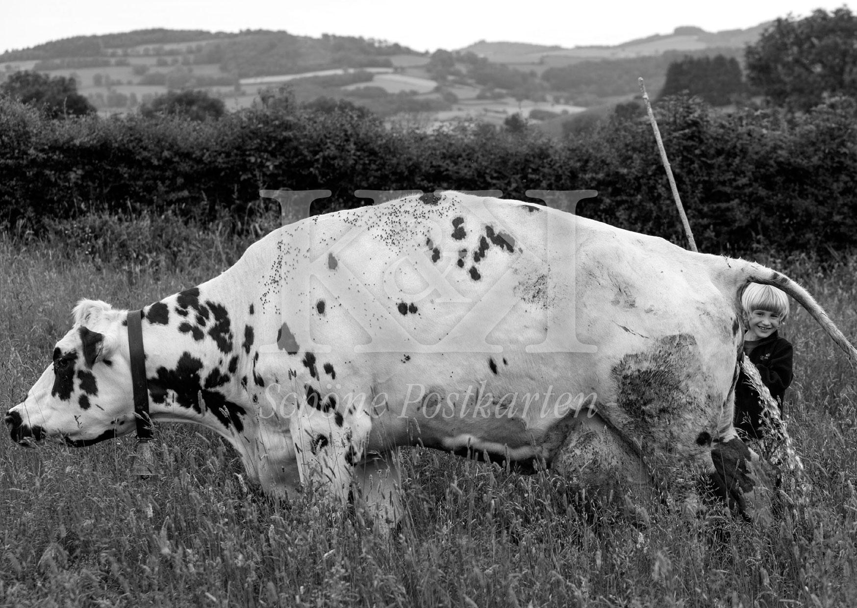 <strong>Schöne Postkarte Nr. 224</strong> · Le garçon qui rit – avec une vache en Bourgogne © 2018