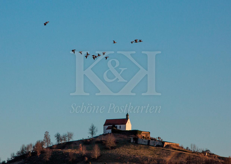 Schöne Postkarte Nr. 252 · Rostgänse über der Wurmlinger Kapelle © 2018