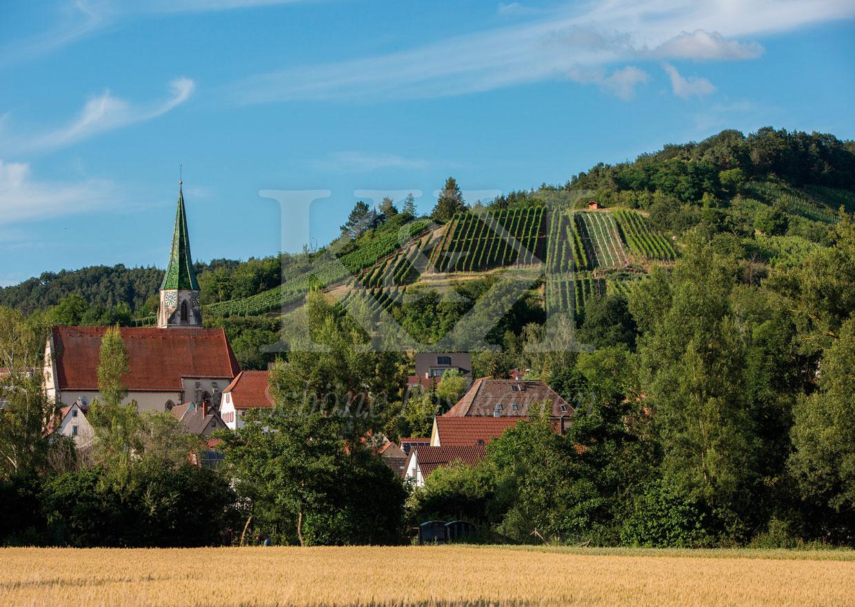 Schöne Postkarte Nr. 64 · Unterjesinger Weinberge bei Tübingen © 2018