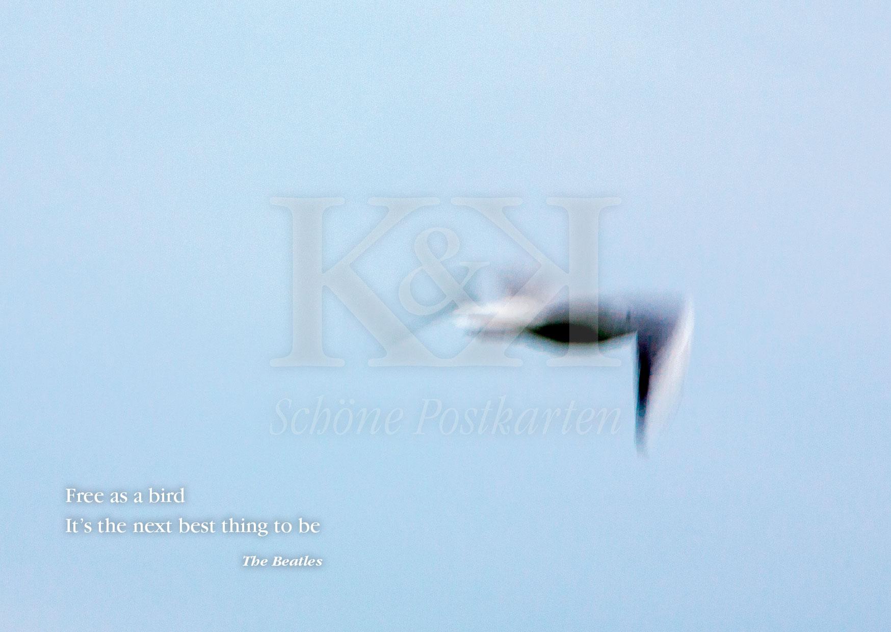 >>> NEU: Schöne Postkarte Nr. 70 · Free as a bird – wären wir wohl alle manchmal gerne